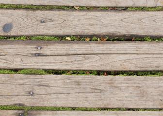 wood panel floor texture with green moss