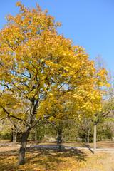 Beautiful autumn park