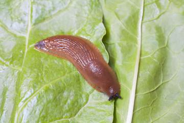 Birds eye view of slug on leaves