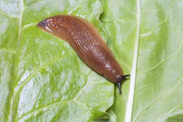 Birds eye view of slug