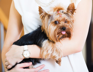 Girl caressing charming Yorkie terrier