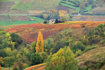 Vignoble du Beaujolais en automne
