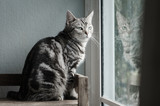 Cute tabby cat sitting and looking