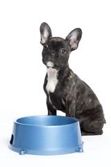Bulldogge mit Futternapf