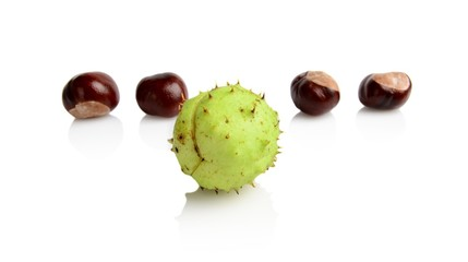 Four chestnuts different in line isolated on white background