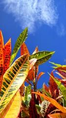Colori e grafismi naturali