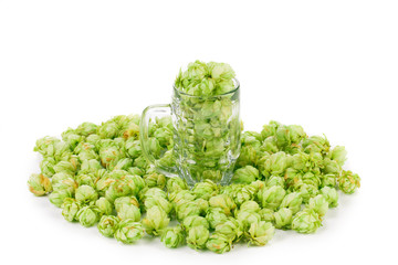 green hop in mug