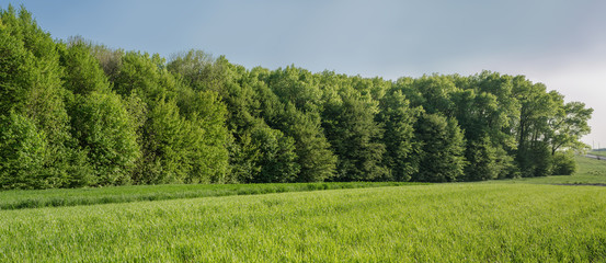 Panorama of spring field in village
