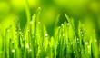 Green Grass - 73408917