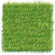 grass background - 73408979