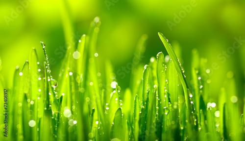 Obraz na Plexi Green Grass