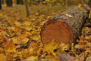 cut tree logs piled up