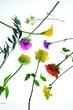canvas print picture - Blumendekoration