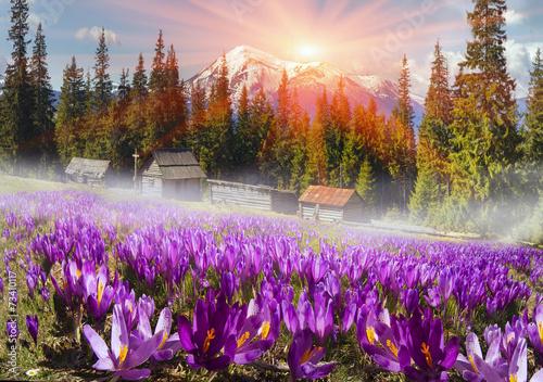 Fotobehang Krokus Mountain ranges of Ukraine