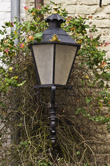 Old fashioned street lamp growing through vines