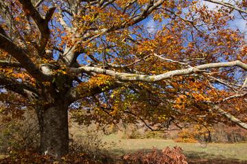 Cielo azzurro fra i rami di un vecchio albero