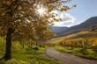 Leinwanddruck Bild - Weinlage Kastanienbusch in Birkweiler