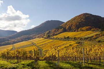Weinlage Kastanienbusch in Birkweiler