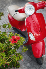 Hibiscus flower and scooter on Kos island