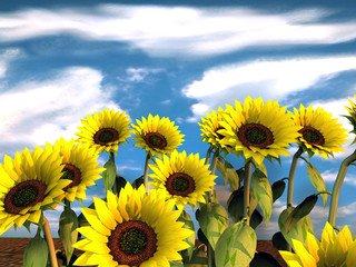 Group of sunflowers and blue sky - 3d rendering