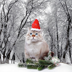Cat in santa cap in winter forest