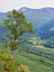 Hills near Ben Nevis,Scotland