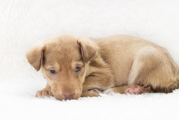 cute puppy on a white blanket