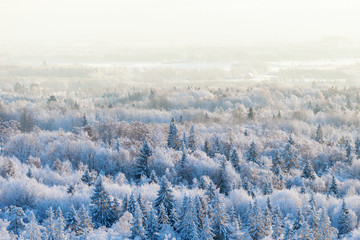 Winter forest view