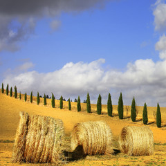 golden hills of Tuscany. Italian landscapes