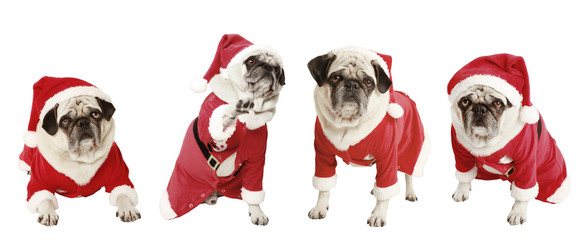 four pugs as Santa Claus