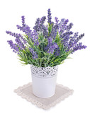 pot with lavender isolated on a white - 73425540