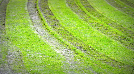 pelouse en mauvais état