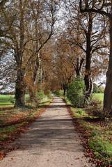 Autumn in an English rural Lane