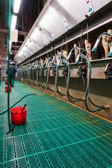 Milcherzeugung, moderner Melkstand