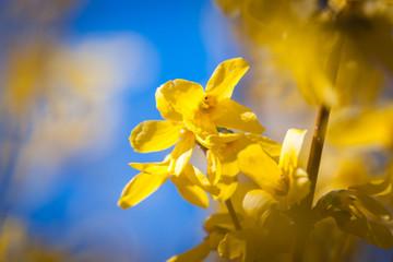 Spring flowers, Spain