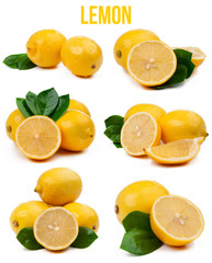set of six compositions lemons isolated