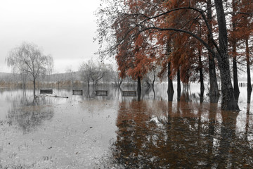 Varese Lake, overflow in the public park Zanzi