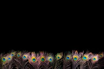 Pfauenfedern