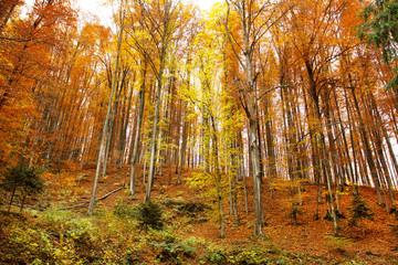 Autumn hill landscape