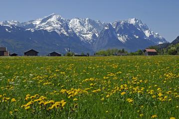 Frühlingswiese vor Wettersteingebirge