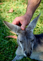 Wallabee Affection