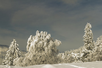 Picturesque winter scene with trees covered in snow