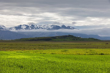 Green fields in the valley in Iceland