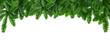 grüne Tannenzweige vor weißem Hintergrund