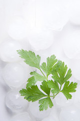 Parsley leaves