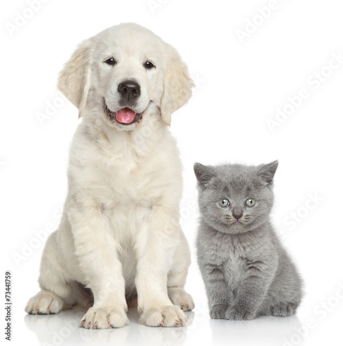Foto op Plexiglas Kat Cat and dog together