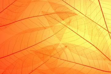 Skeleton leaves background