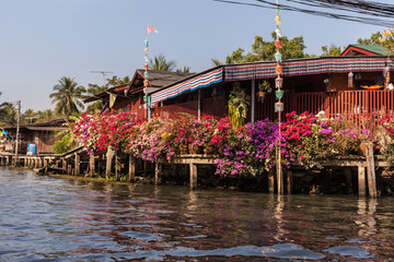 Flowers in Thailand