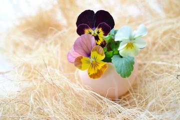 卵の殻にビオラを