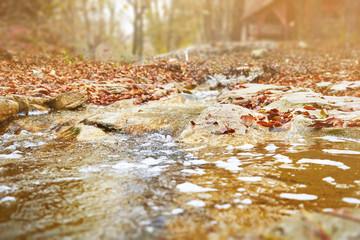 Stream in autumn forest